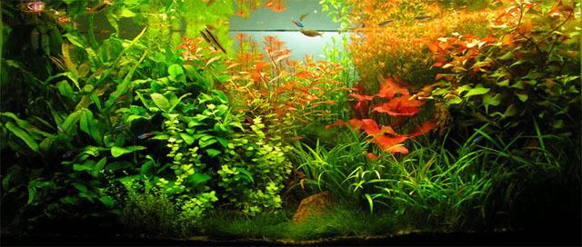 monologo desde un cristal, persistencia o cambio, mar vidal, peces, acuarios, cuento, relato