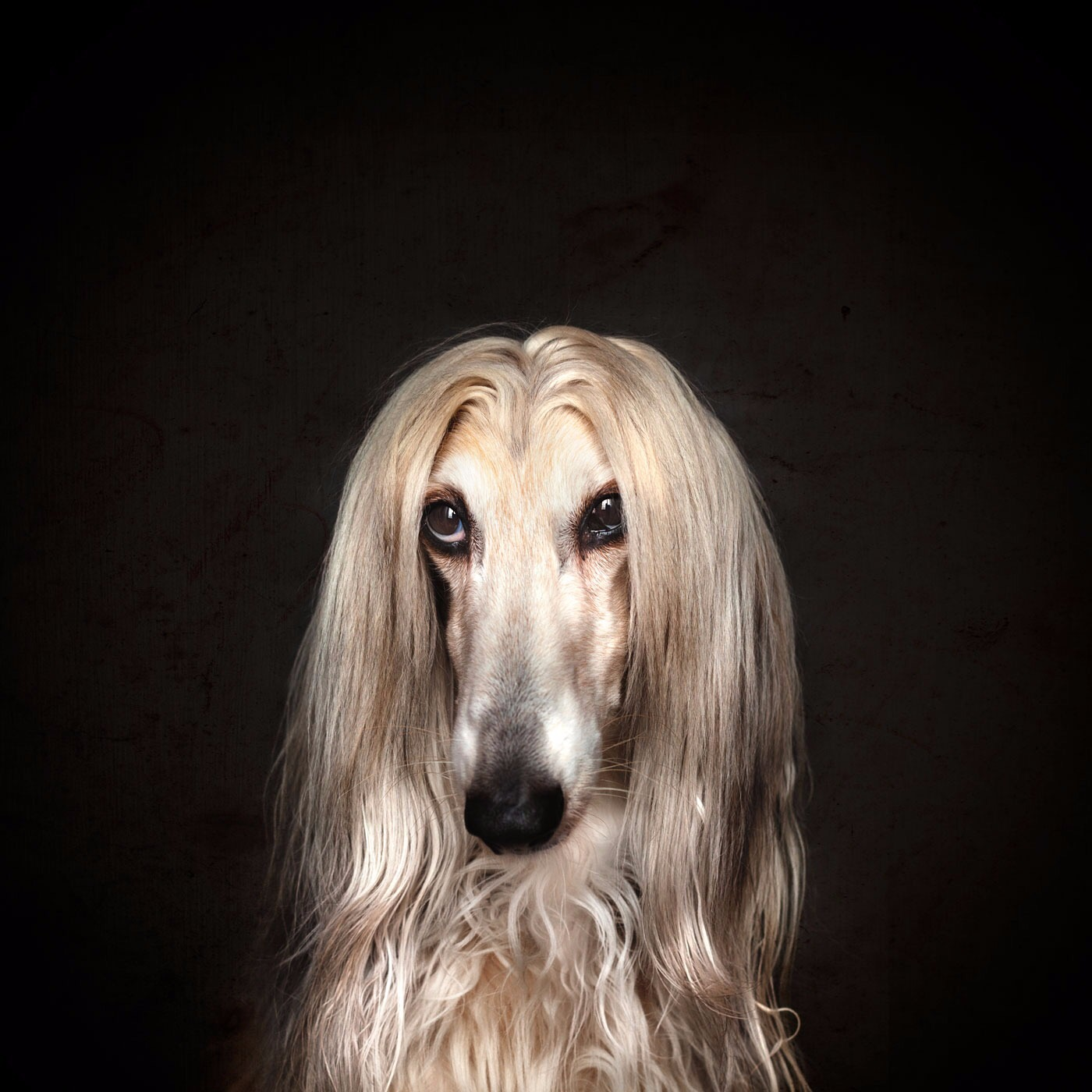 sintiéndonos-como-autenticos-modelos, mar vidal, persistencia o cambio, Fer Villafaina, Ojos de Hojalata, fotografía, retrato, perros, galgo afgano