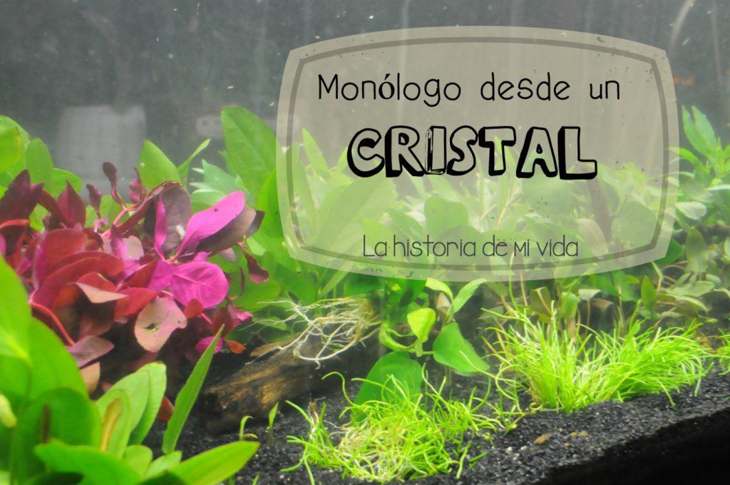 monologo desde un cristal, persistencia o cambio, mar vidal
