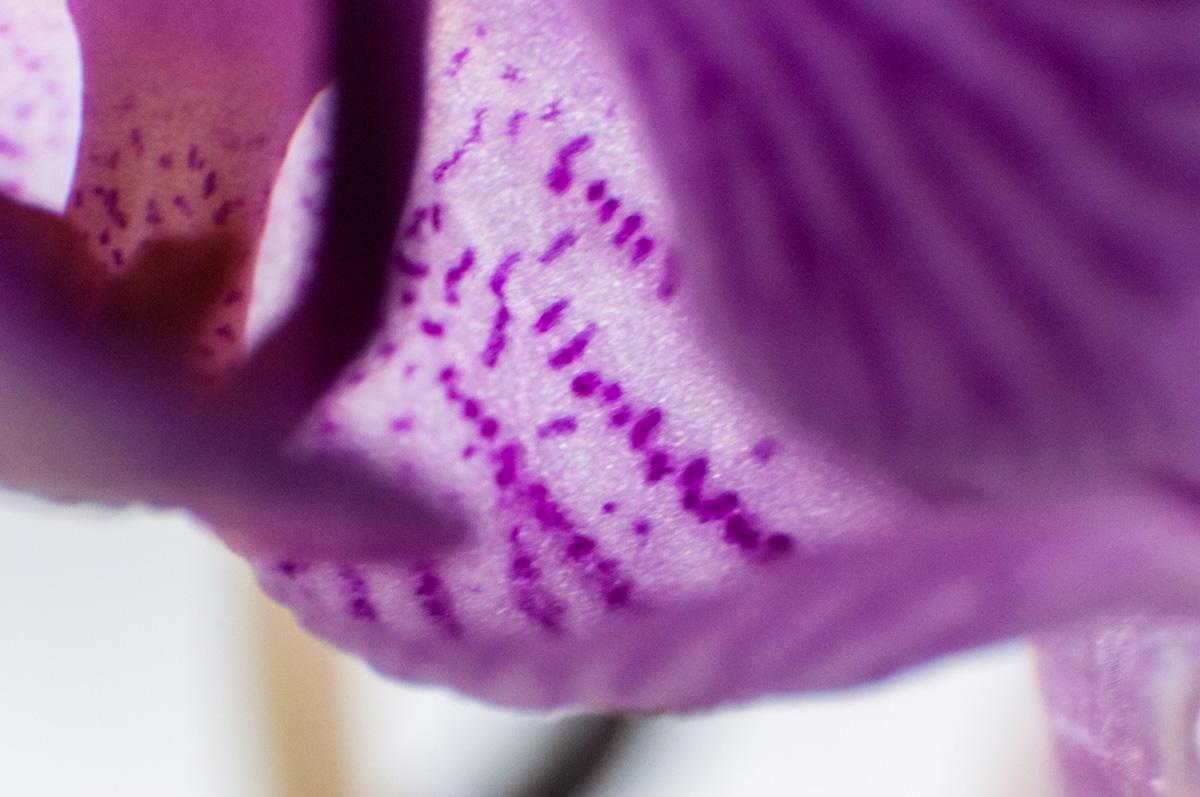 técnicas-fotograficas-macrofotografia, macro, fotografia, mar Vidal, la casa de mar, foto, mujeres, marvidalg, Instagram, meapuntoalreto